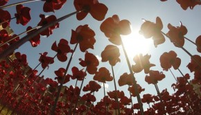 Ceramic-Poppies-in-Tower-of-London2-640x480
