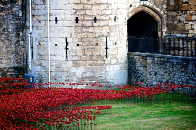 Ceramic-Poppies-in-Tower-of-London3-640x425