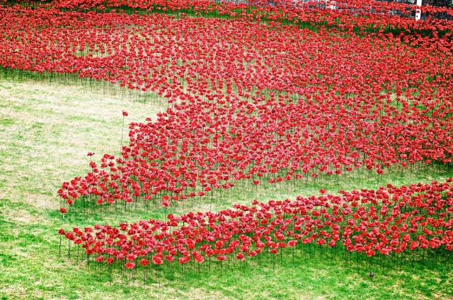 Ceramic-Poppies-in-Tower-of-London4-640x425