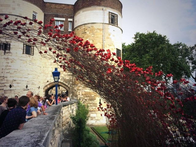 Ceramic-Poppies-in-Tower-of-London5-640x480