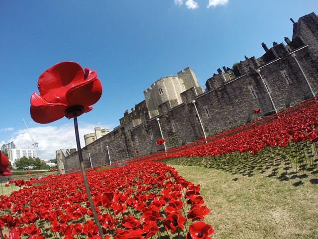 Ceramic-Poppies-in-Tower-of-London6-640x480