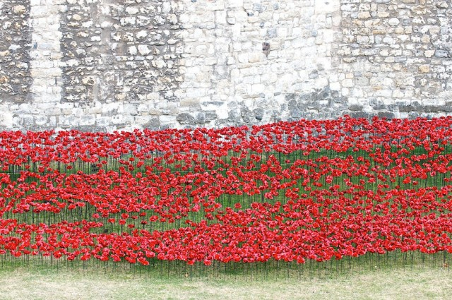 Ceramic-Poppies-in-Tower-of-London7-640x425