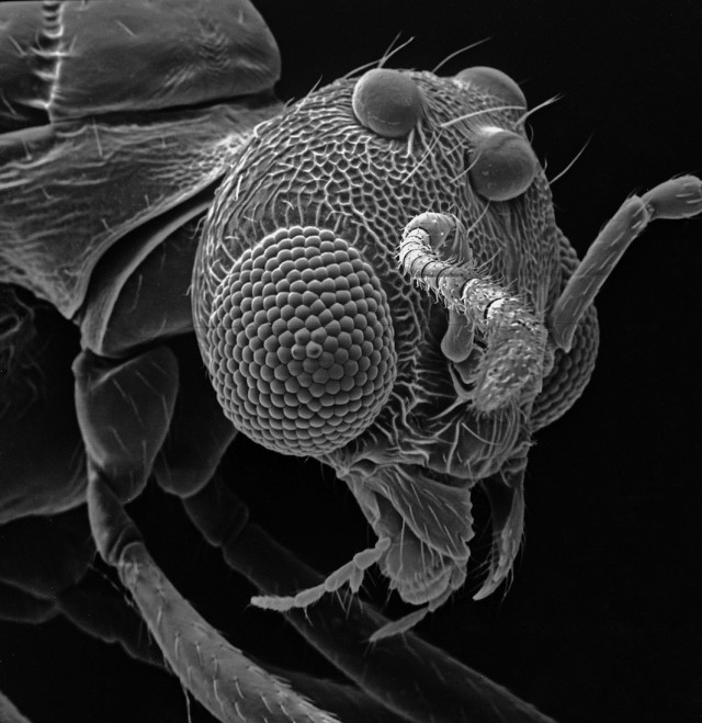 Insect-Photography-with-Electron-Microscope3-640x659