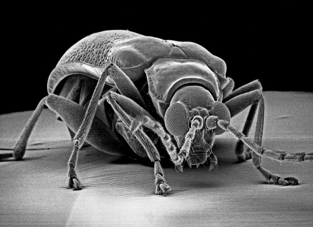 Insect-Photography-with-Electron-Microscope4-640x465