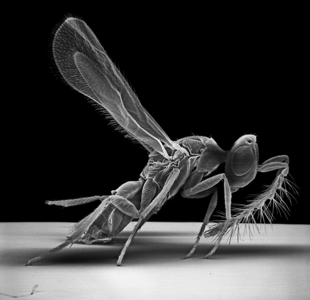Insect-Photography-with-Electron-Microscope7-640x618