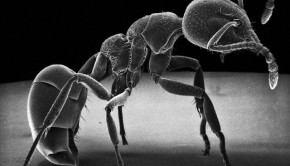 Insect-Photography-with-Electron-Microscope2-640x608